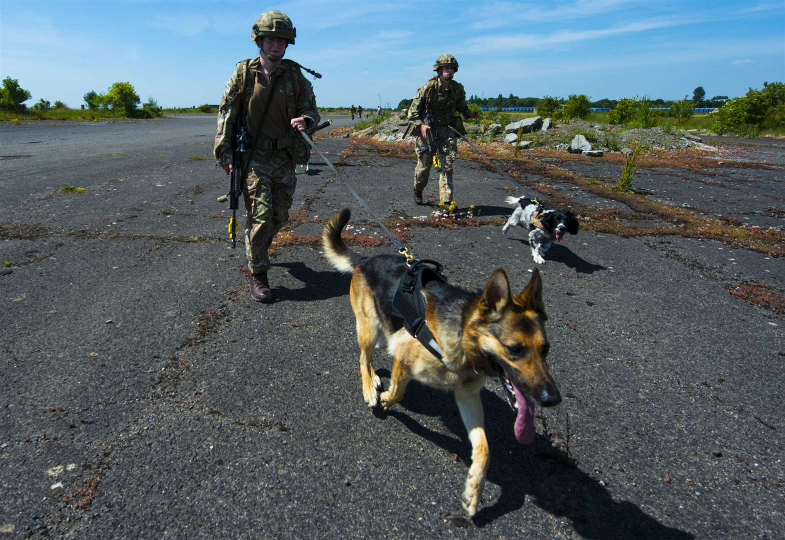 Military dogs and handlers put to the test