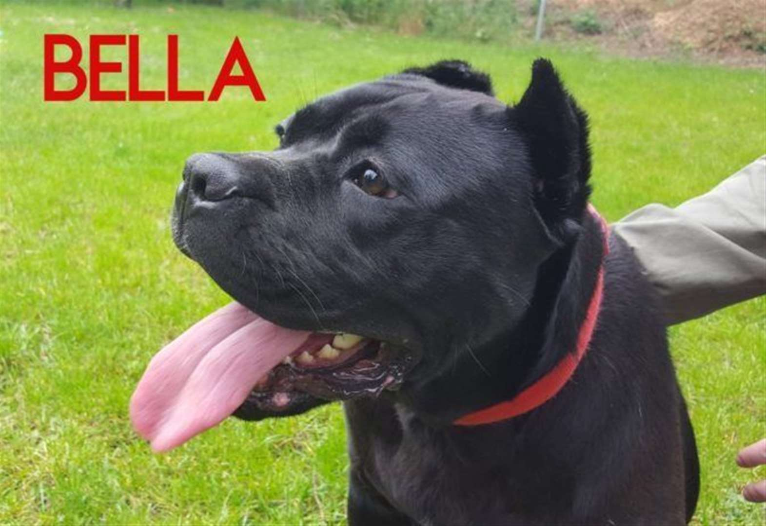 Loving and friendly Bella needs a home